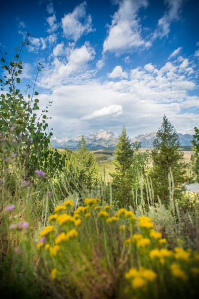 Mom's Delight Art | Earth Trotter Photography