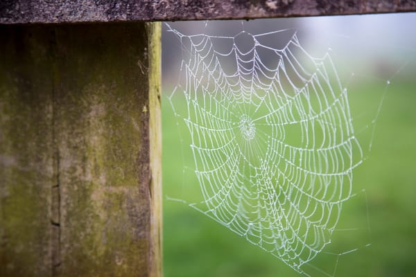 Morning Dew Art | Earth Trotter Photography