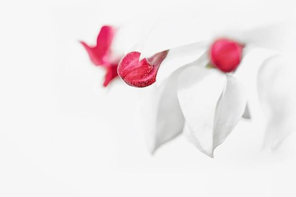 High Key Flower - Bill Van der Hagen Photography
