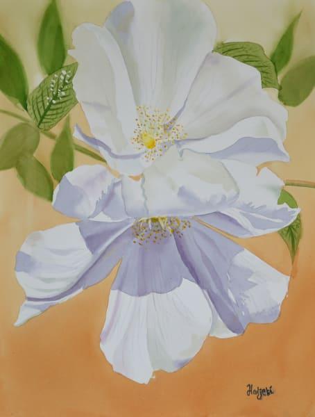 Rogusa Roses by Sanibel artist Shah Hadjebi