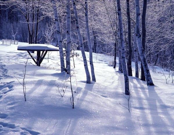 Winter Yard - Snow, and Frost - shop fine art prints | Closer Views