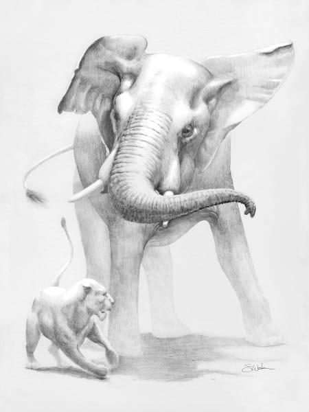 elephant, animals, wildlife