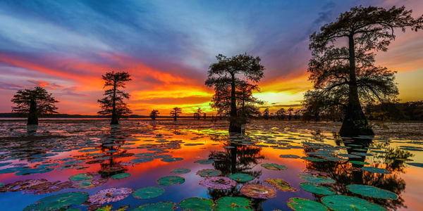Caddo Lake Sunset Photography Art | John Martell Photography
