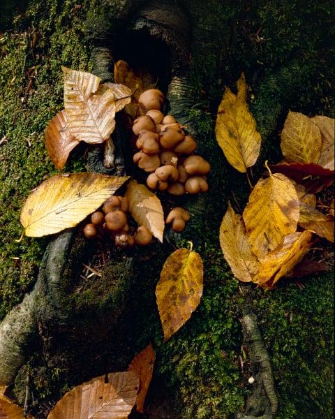 Mushrooms, Moss & Elms