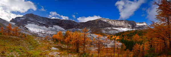 Larch trees glow in this hanging valley in the Rockies. |Banff national Park|Canadian Rockies|Rocky Mountains|