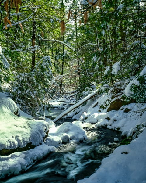 Valhalla Creek Fresh Snowfall