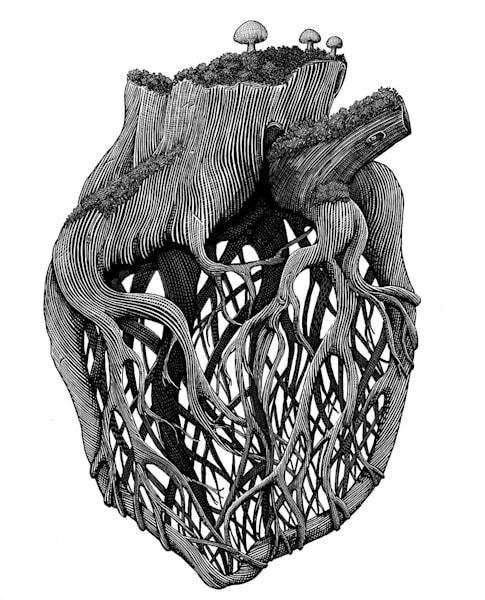 Ben Palmer - Heart Root