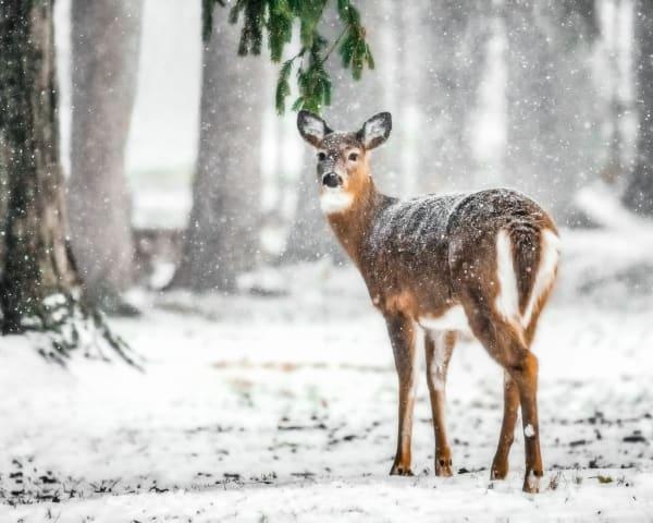 Meet Me Under The Mistletoe Photography Art | Trevor Pottelberg Photography