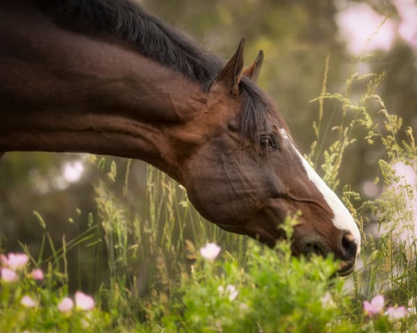 Spring Grazing Photography Art | Carol Brooks Parker Fine Art Photography