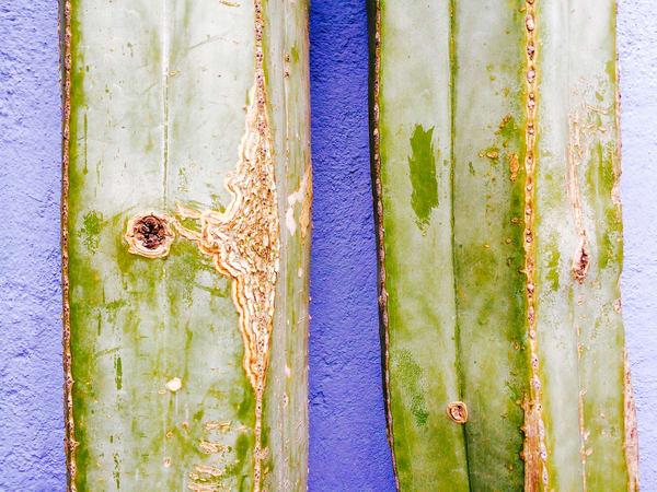 Cactus Wall Art | Michael Haggiag