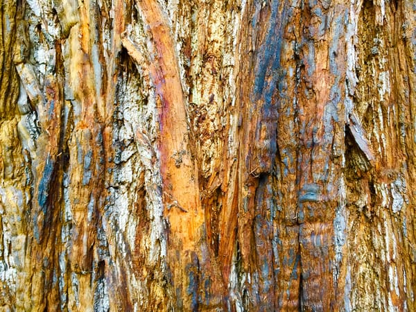 BARK RAIN - Abstract Photography Print for Sale | Michael Haggiag Photographic Artist.
