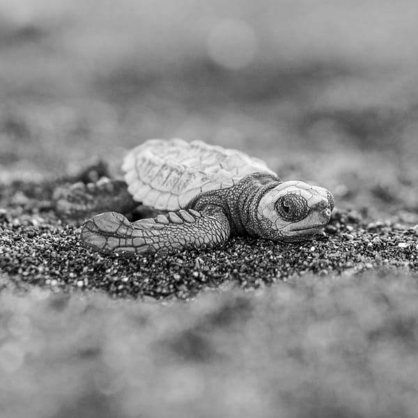 Hatchling Photography Art | Kit Noble Photography