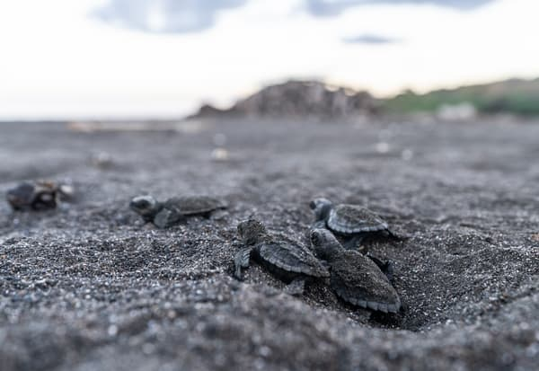 The Hatchlings Photography Art | Kit Noble Photography