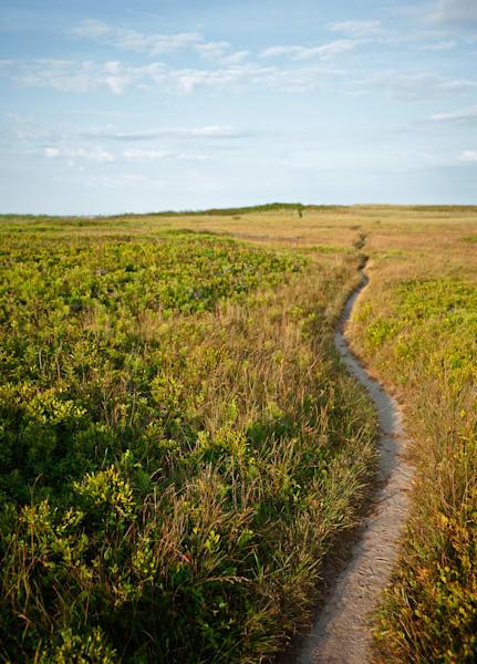 Beach Path Vertical Photography Art | Kit Noble Photography