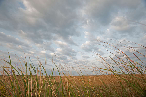 Blowing Sea Grass Photography Art | Kit Noble Photography