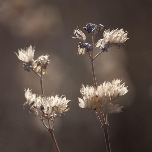 Dried Winter White  Art | Jenifer Cady Photography