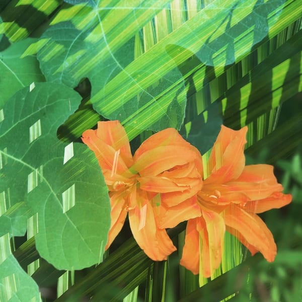 Orange Lilly Palm Art | Jenifer Cady Photography
