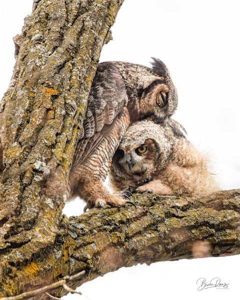 You'll Always Be My Owlet Photography Art   brucedanz