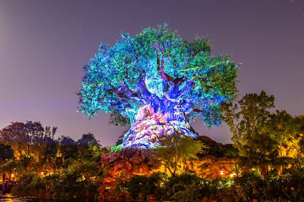 Tree of Life Lights - Disney World Wall Art   William Drew Photography