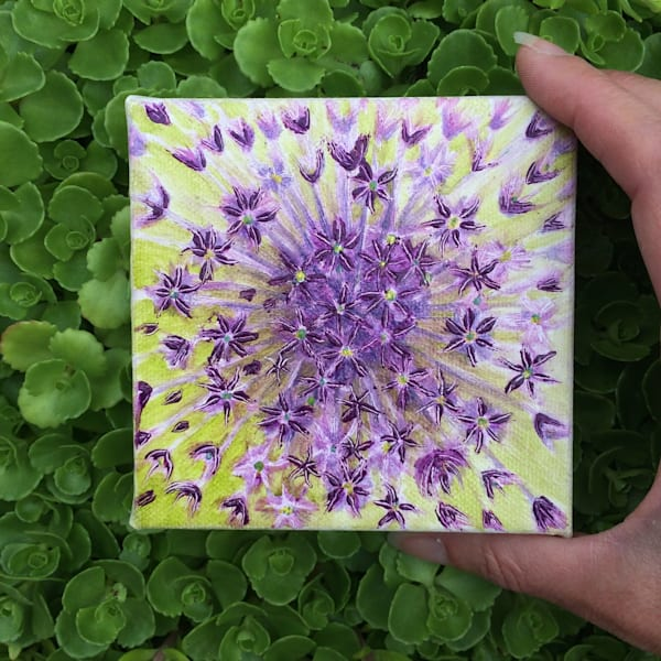 Firework is a Still Life Painting of an Allium Flower by Marie Stephens