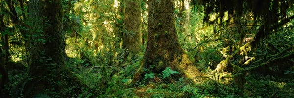 Hoh Rain Forest Photography Art | ePictureGallery