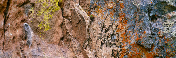 Rock And Lichen Patterns Photography Art | ePictureGallery