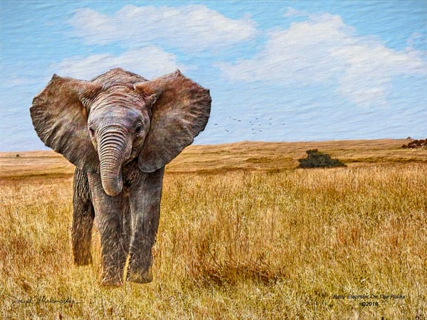 Baby Elephant On The Plains - The Gallery Wrap Store