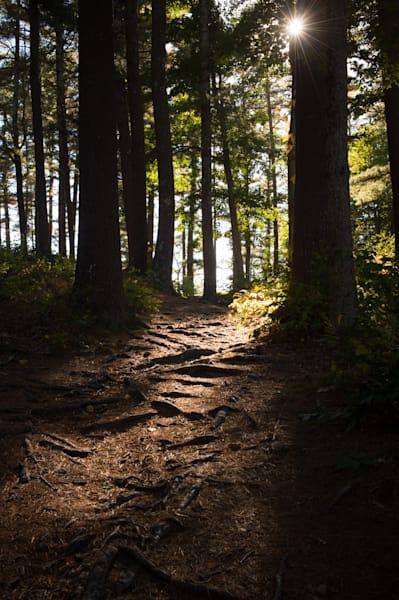 A Brighter Path