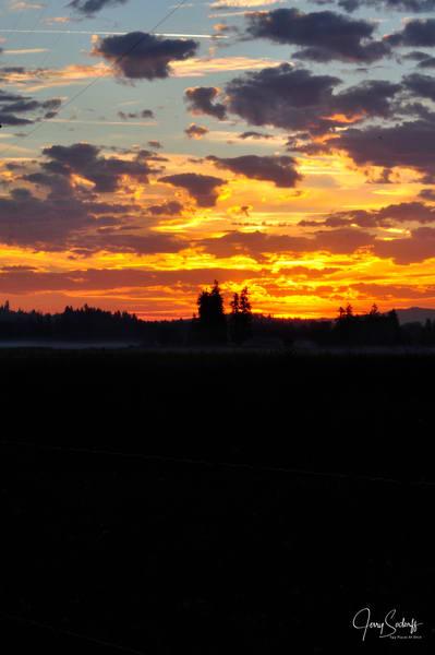 Sunrise Trees Horizon