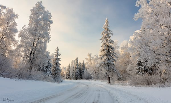Hoarfrost covered  trees line snow covered road in Southcentral Alaska. Winter. Afternoon.