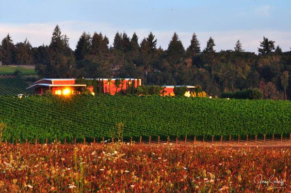 Palmer Creek Vineyards