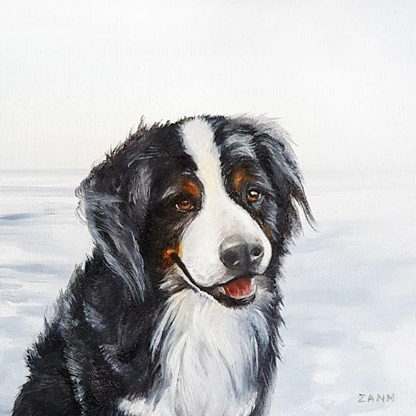 Bhodie The Bernese Mountain Dog Art | Van Isle Dog Art