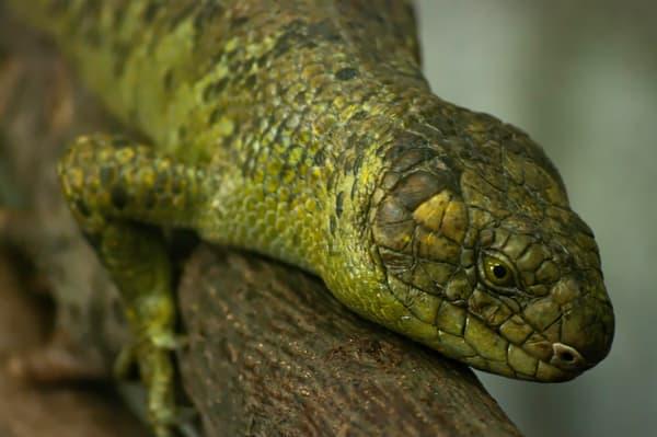 Green Lizard Photography Art | Kathleen Messmer Photography
