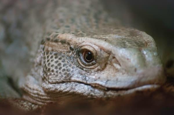 Flat Lizard Photography Art | Kathleen Messmer Photography