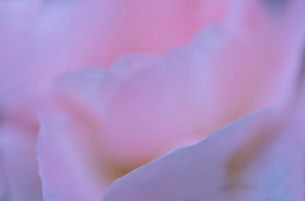Pink Ridges Photography Art   Kathleen Messmer Photography