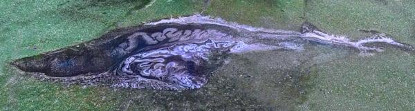 Pollen Creature Art | capeanngiclee