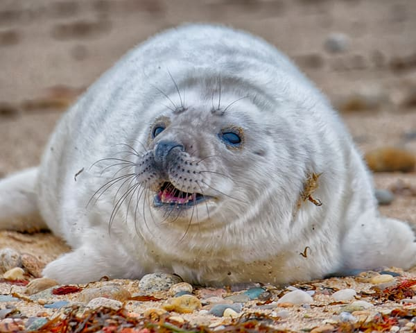 Chappy Seal Pup Photography Art | Michael Blanchard Inspirational Photography - Crossroads Gallery