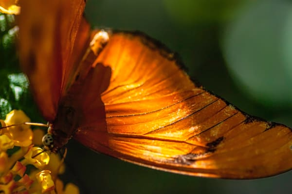 New Jersey Butterfly Photography Art | Kathleen Messmer Photography