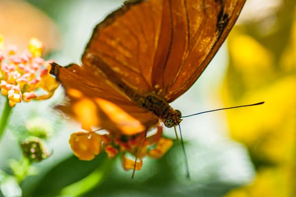 New Jersey Butterfly 4 Photography Art | Kathleen Messmer Photography