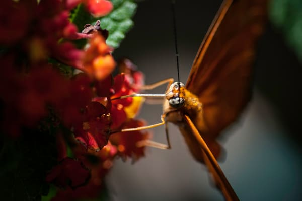 New Jersey Butterfly 3 Photography Art | Kathleen Messmer Photography