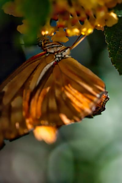Viceroy Butterfly Photography Art | Kathleen Messmer Photography