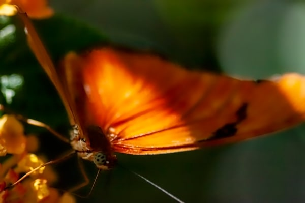 New Jersey Butterfly 2 Photography Art | Kathleen Messmer Photography