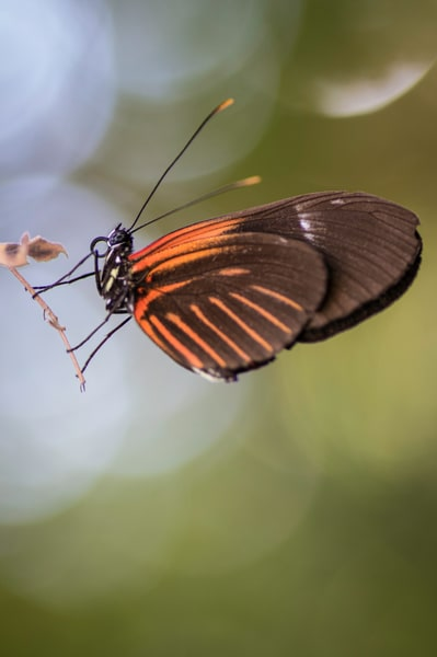 Orange And Brown Butterfly  Photography Art | Kathleen Messmer Photography
