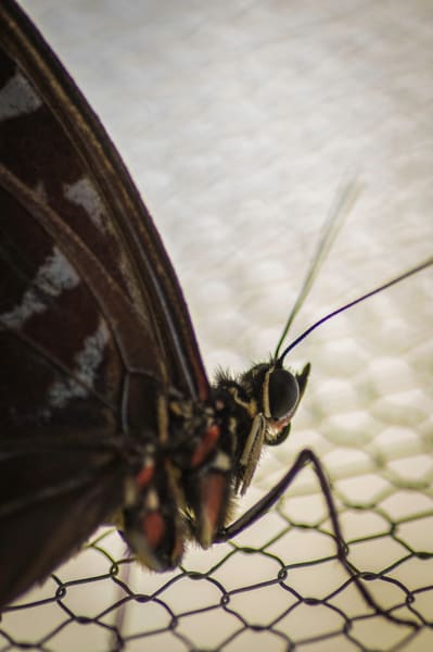 Large Screen Butterfly Photography Art | Kathleen Messmer Photography