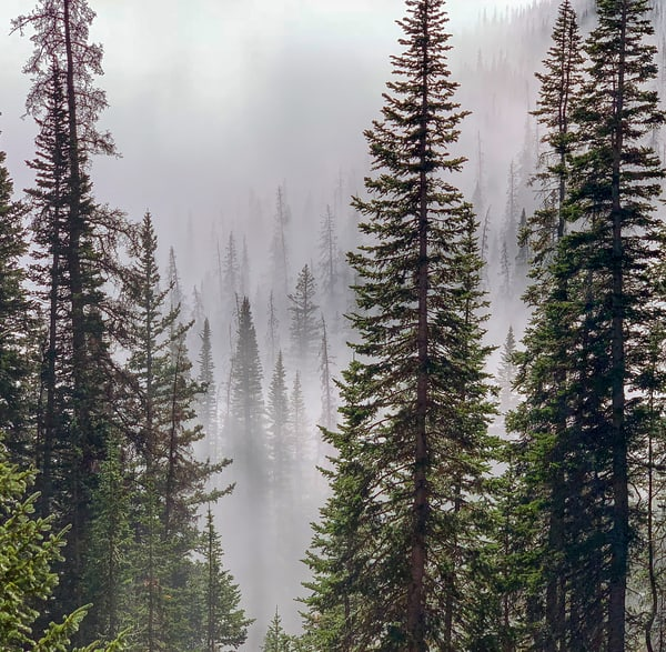 Photo of Pine Forest Fog & Mist Rocky Mountain National Park CO