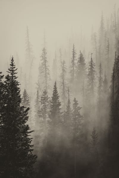 Photo of Pine Forest in Fog and Mist Rocky Mountain National Park Colorado