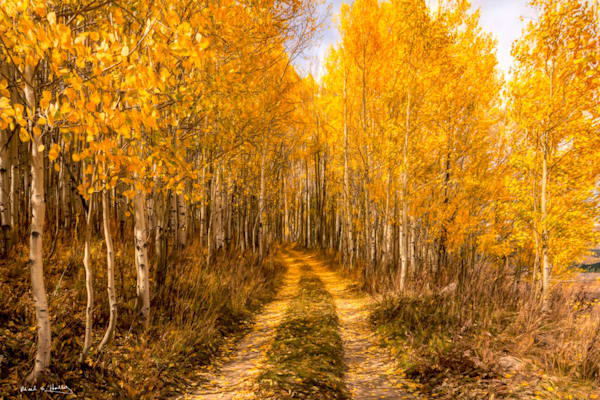 art, fine art, contemporary, fall, aspen, leaves, colorado, mountain, colorful, bold