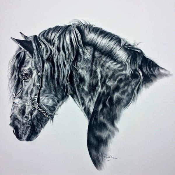 Odin - Friesian horse portrait in charcoal