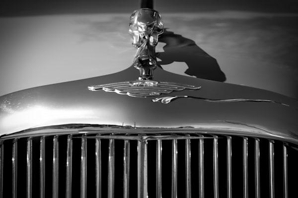 Jaguar Grill Photography Art | Kathleen Messmer Photography