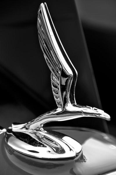 Bird Hood Ornament 2 Photography Art   Kathleen Messmer Photography
